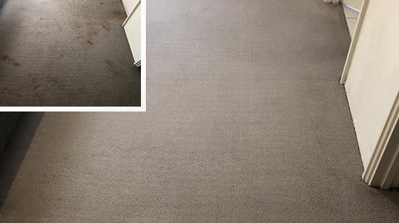 REMOVAL OF BLOOD STAINS FROM CARPET